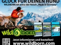 Sponsor Wildborn